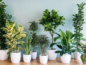 Các loại cây trồng trong nhà đem lại không gian thoáng mát cho bạn
